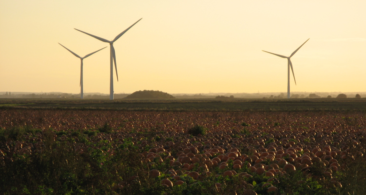 Wind turbines behind a pumpkin field