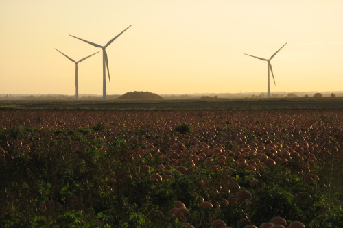 Field with turbines