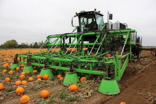 The pumpkin harvester